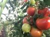 Resorteigene Landwirtschaft