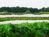 resorteigene Landwirtschaft_Projekt Organic